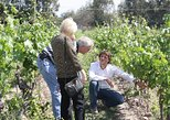 CHILEAN WINE LOVERS IN CASABLANCA VALLEY