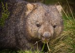 Cradle Mountain Wildlife Spotting after Dark
