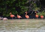 Celestun Biosphere Reserve Tour from Merida