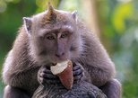 Best of Ubud: Monkey Forest, Temple, Rice Terrace, Waterfall and Coffee Tour