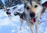 Drive Your Own Dog Sled