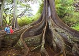 Allerton Garden Entry at National Tropical Botanical Garden with Guided Tour