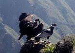 Arequipa Colca to Puno, Full dayTour
