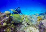 Discover Scuba Diving & Snorkeling Combo