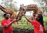 Africa Fund for Endangered Wildlife's Giraffe Centre and David Sheldrick's Elephant Orphanage Tour from Nairobi