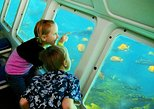 Catalina Island Day Trip from Anaheim or Los Angeles with Undersea Adventure