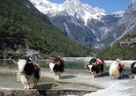 Yak Meadow at Jade Dragon Snow Mountain and Shuhe Ancient Town from Lijiang