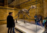 Dinosaur Discovery: The Natural History Museum Family Tour