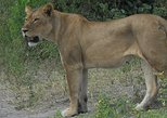 5 Nights Hwange and Matopo National Park Safari Tour