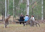 Blue Mountains #1 Day Tour includes popular breakfast with the wild Kangaroos