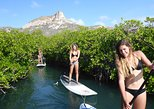 Guided paddleboarding (SUP) mangrove ECO tour for beginners (no transfer)