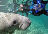 Swim with Manatee Adventure!