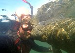 Private Swim with Manatee Adventure