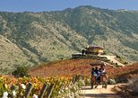 Colchagua Valley Winery Day Trip from Santiago