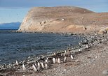 South America - Argentina: Magdalena Island Penguin Tour by Boat from Punta Arenas