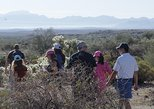 Scottsdale Hike & Dine - Guided hike with brunch or dinner included