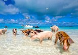 Bahamas Express-Ferry with pick-up & optional Swim with Pigs