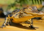 GatorWorld Parks Single Day Admission