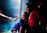 Mystic Aquarium General Admission Ticket
