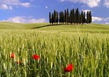 Montalcino, Orcia Valley, Pienza, and Montepulciano: Wine- and Cheese-Tasting Guided Tour from Florence