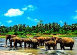 Private Kandy Day Tour with Pinnawala From kalutara