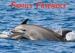 Dolphin Odyssey and Sightseeing Tour