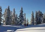 Elfin Lakes Day Hike or Snowshoe