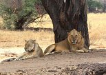 3 DAYS BEST OF SELOUS GAME RESERVE ROAD TRIP