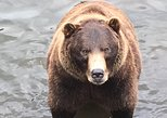 Sitka's Best : Bears, Tasters and Totems Tour