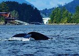 Private Whale Watching and Marine Wildlife Tour