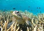 Coral Bay 3-Hour Turtle Ecotour