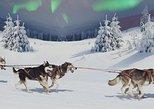 Hunting Northern Lights with Husky