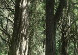 Africa & Mid East - Ethiopia: Day Trip To Menagesha Suba Forest