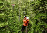 Douglas Island Zipline Tour from Juneau