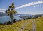Small-Group Tour of Dunedin City