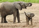 Full - Day Safari to Arusha National Park from Arusha Town