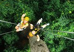 live the tarzan dream: rainforest canopy zipline experience