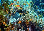 Red Sea Diving Trip from Hurghada: Beginner to Advanced Divers