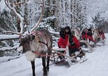 Lapland Northern Lights Experience by Reindeer Sled from Luosto