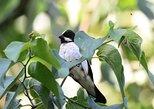 Asuncion Birding Tour