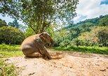 Elephant Care, Feeding, ATV Riding and White Water Rafting