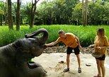 Elephant Care and Feeding