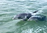 Private Historical Wildlife & Dolphin Cruise South Padre Island