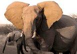 Budget Pilanesberg Full Day Safari