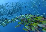5 day SCUBA Diving tour from Johannesburg