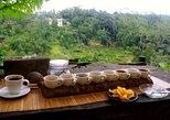 Bali Sightseeing combination Luwak Coffee Tour