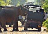 Private Jeep Safari tour at Wilpattu National Park from Sigiriya or Dambulla