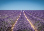 Half-Day afternoon lavender tour in Valensole from Aix-en-Provence
