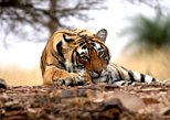 Ranthambore Wildlife Safari Tour with Lunch