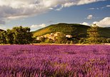 Small-group Lavender Fields Tour from Avignon